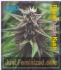 Emerald Triangle Royal Purple Kush CBD Fem 5